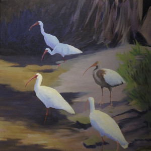 "Ibis Group (4 Adults, 1 juvenile), 20x20"", acrylic on canvas"